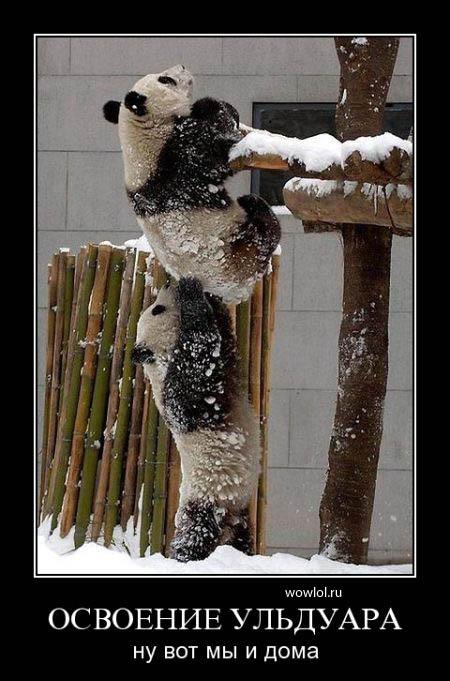панды!