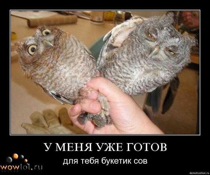Букетик сов