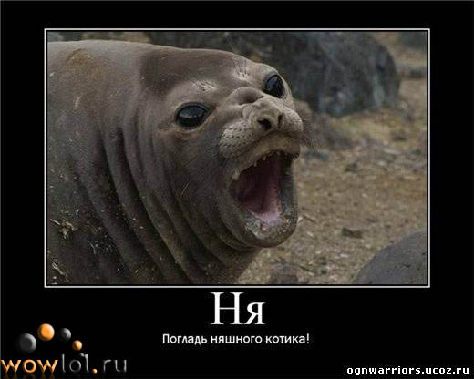 Морской котэ