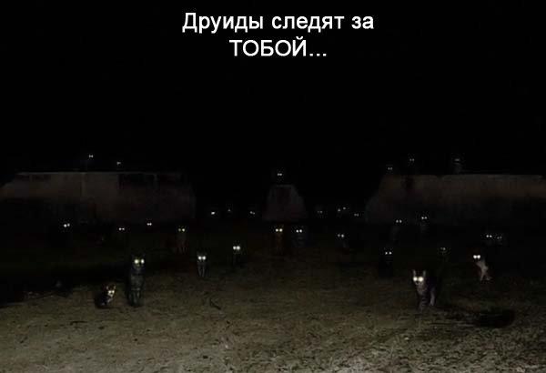 друиды следят за тобой