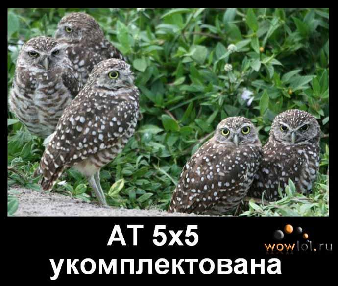 Арена-тима из 5 сов