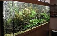Как избавится от мутной воды в аквариуме