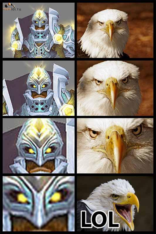 Паладин VS Орел