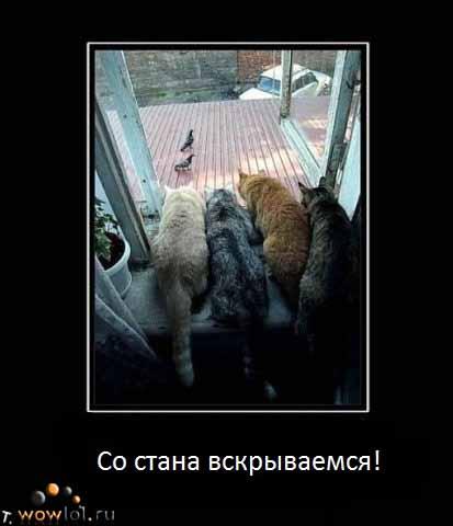 Коты перед атакой