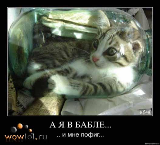 Котег в баббле