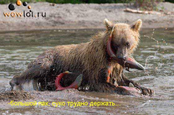 Слишком большой пак для медведа