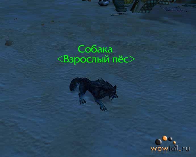 Собака - взрослый пес!