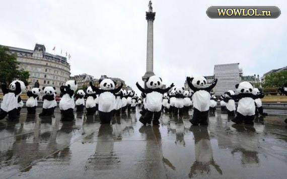 Панды перед 25 сентября