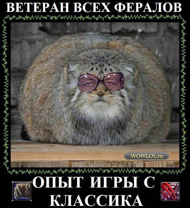 Ферал Ветеран!