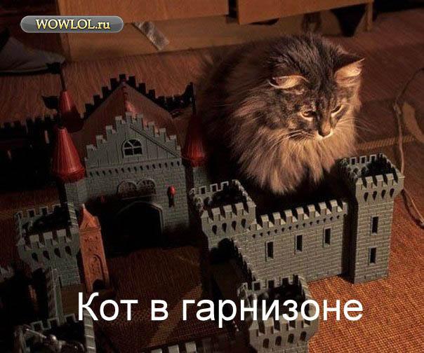 Кот в гарнезоне