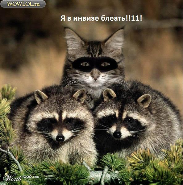 Коты, такие коты. . . .