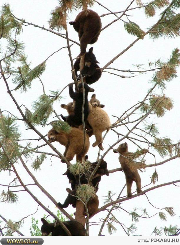 Медведи на дереве