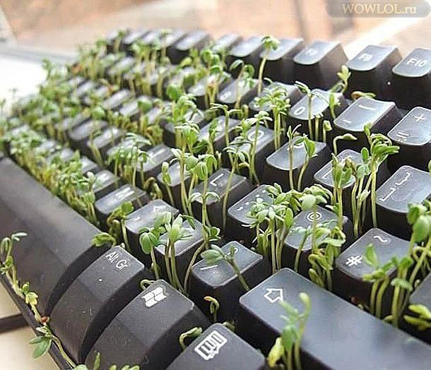 Клавиатура тру рестор друида