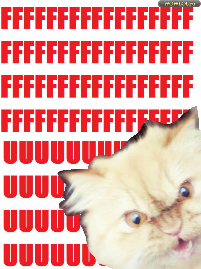 FFFUUU-кот.