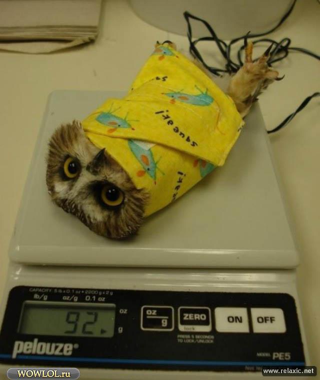 Ещё один измеритель ДПСа совы