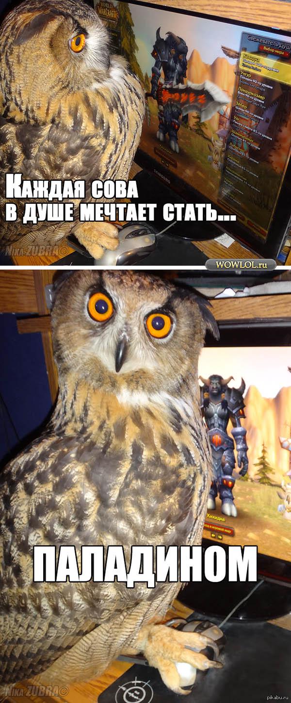 Какая сова в душе не мечтает стать паладином?
