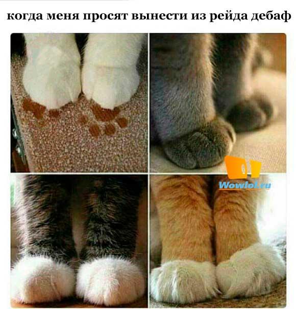 котики мои