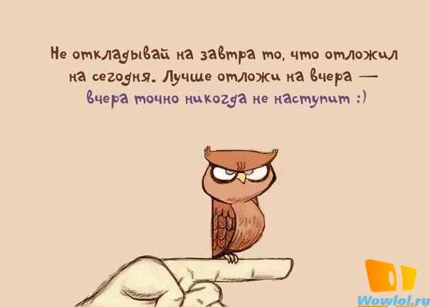 Совиная мудрость