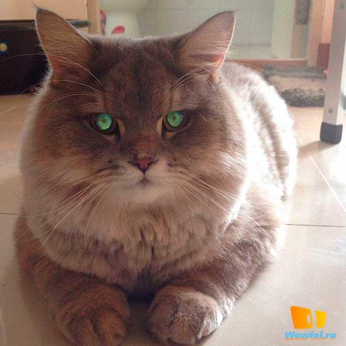 Суровый кот Демон хантера