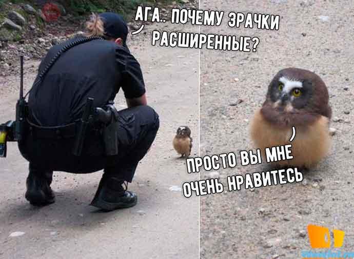 Когда сову поймали за читы