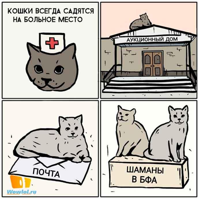 Что вы знаете о кошках?